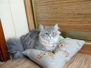 Кошка на подушке