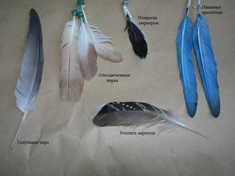 Окраска перьев в домашних условиях. Обсуждение на LiveInternet 342